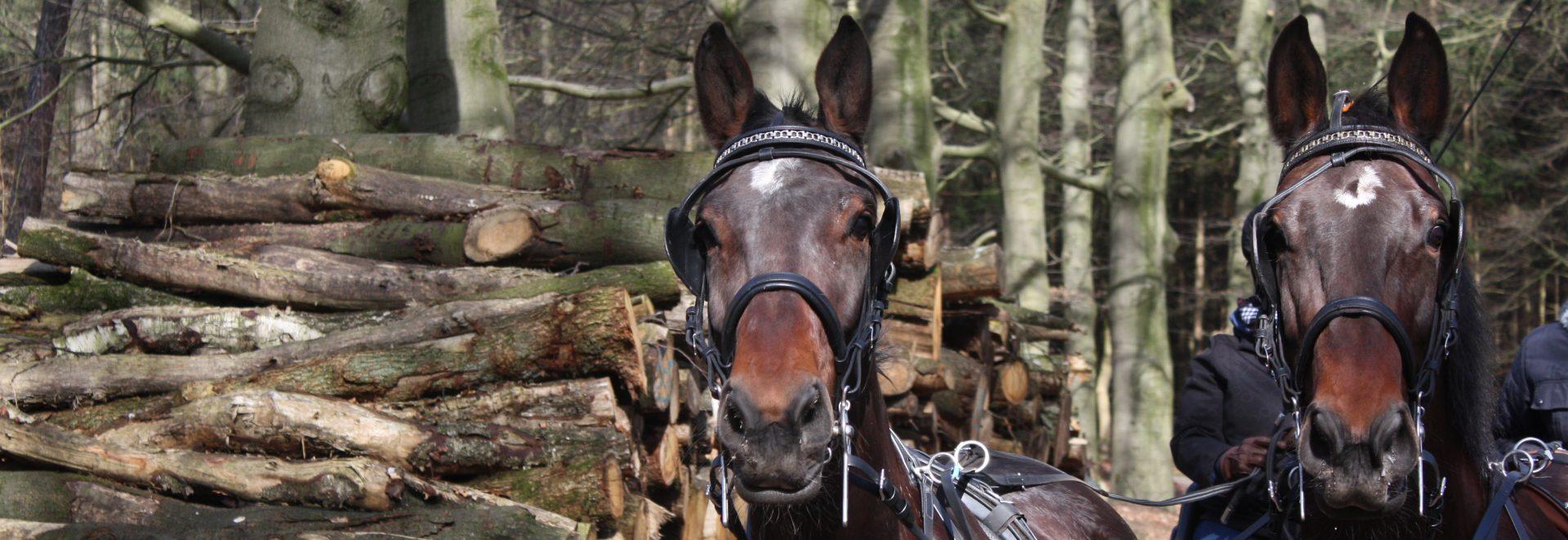 Paardenhouderij de Havezathe
